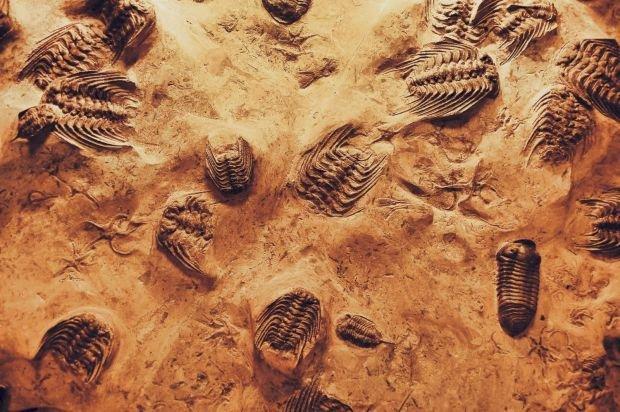 Descoperirea uriașă făcută de cercetători după ce au studiat o fosilă veche de milioane de ani.
